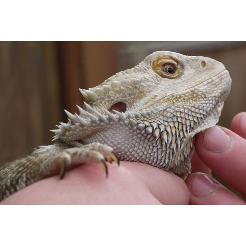 Reptile Encounter product image