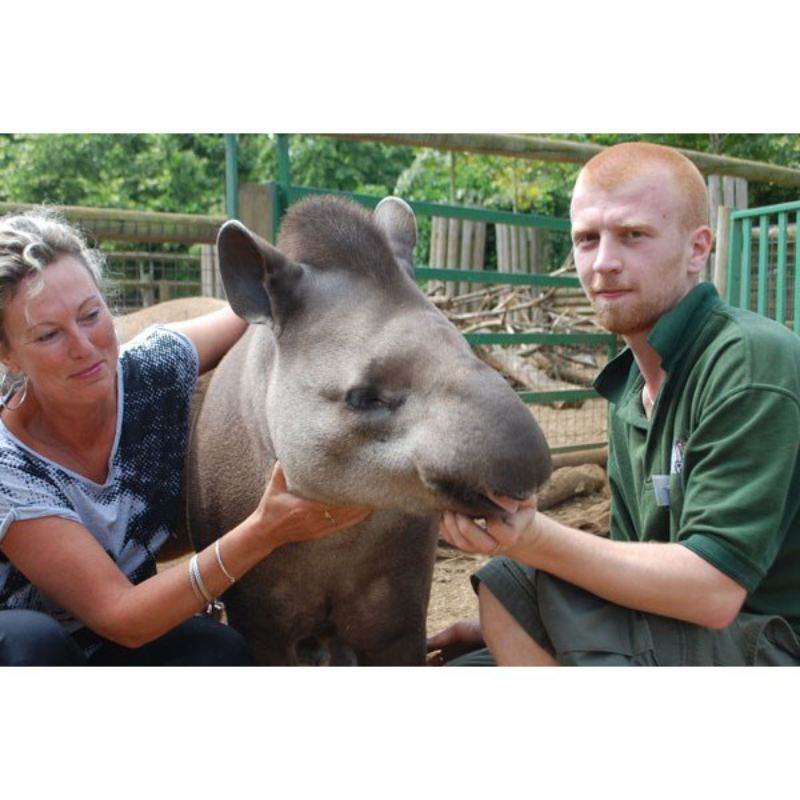Tickle a Tapir Experience for Two at Paradise Wildlife Park product image