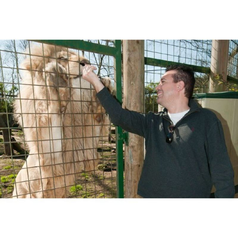 Feed Big Cats by Hand Experience at Paradise Wildlife Park product image