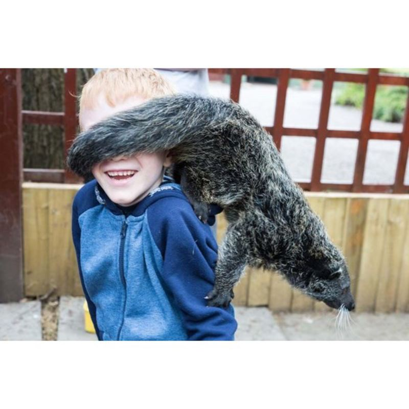 2 for 1 Binturong Experience for Two at Hoo Farm Animal Kingdom  product image