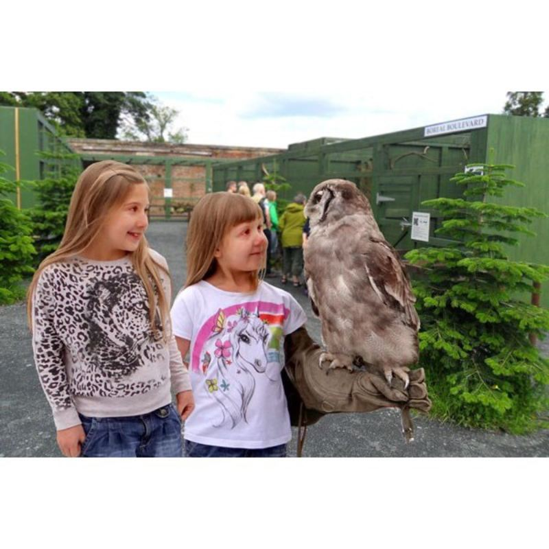Entry to the Scottish Owl Centre for Two Adults - Kids Go Free product image