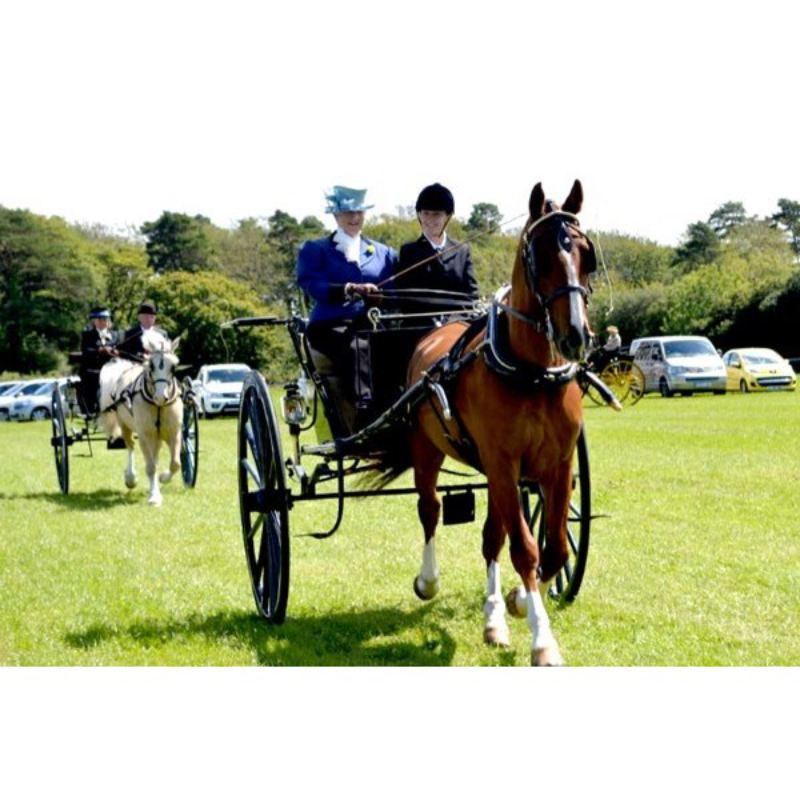 Learn to Drive a Horse and Carriage at Easter Hall Park  product image