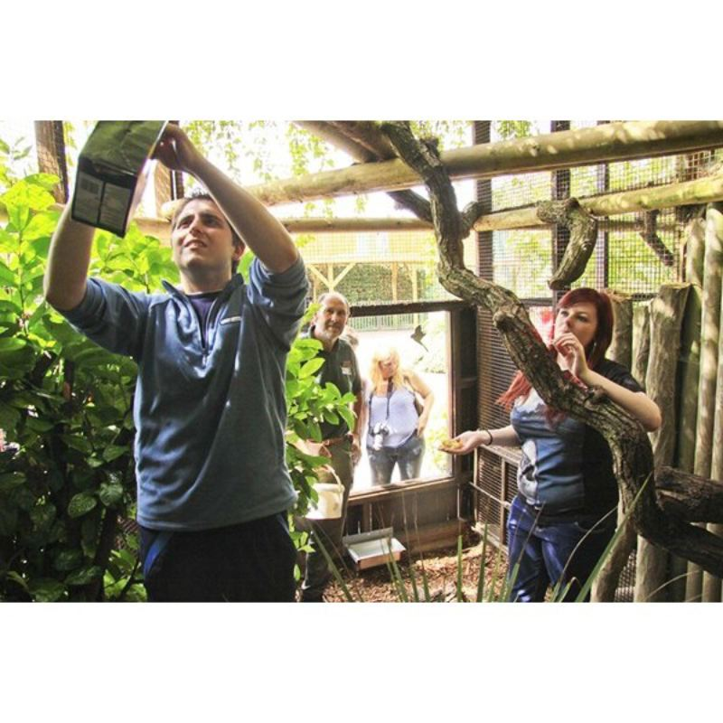 Zookeeper Experience at Paradise Wildlife Park for One Adult and One Child product image