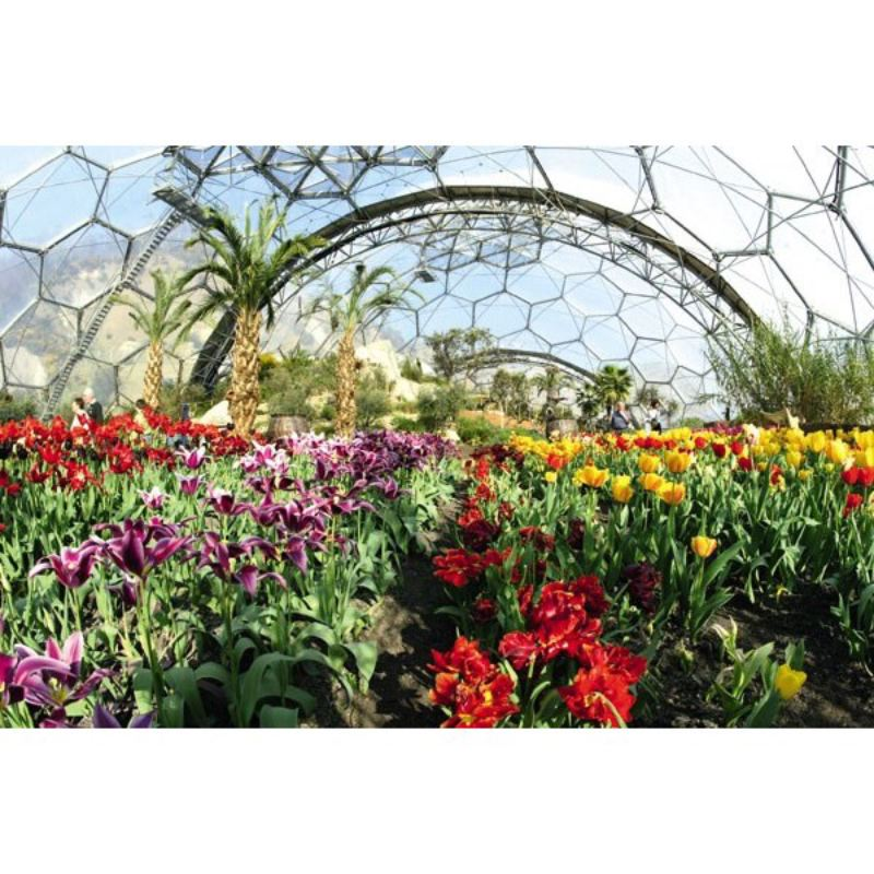 Adult Entrance to The Eden Project product image