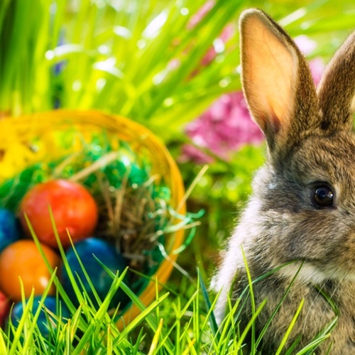 Easter Traditions and History we bet you don't know!
